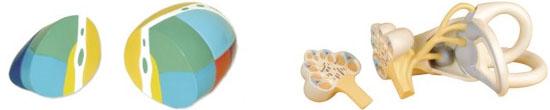 Organen en Structuren
